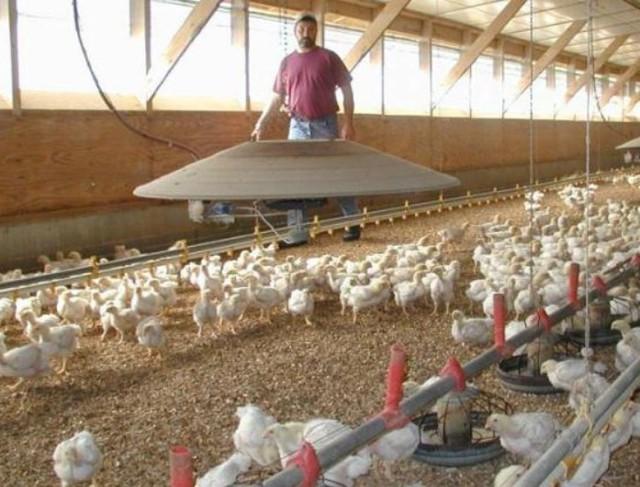 Ампролиум инструкция по применению для птиц и кроликов при кокцидиозе