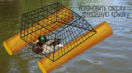 Как поймать дикую утку живой на водоеме, особенности и виды ловли