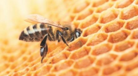 Пчелиное воровство: что делать когда уже началось, как бороться осенью