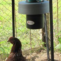 Кормушка для кур своими руками: бункерная, автоматическая с размерами и описанием