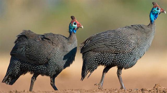 Как отличить самку от самца: определение пола по повадкам, размеру и голосу