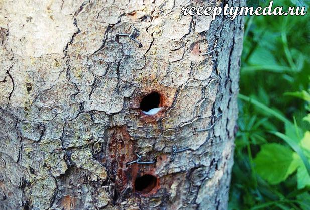 Как сделать ловушку для пчел из бутылки своими руками: виды, требования