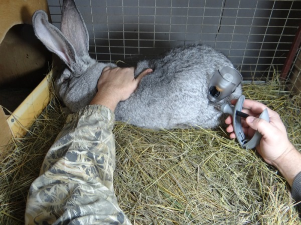 Байтрил инструкция по применению в ветеринарии: для птиц, кроликов, собак, кошек