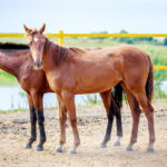 Сколько живут лошади в среднем: что влияет на продолжительность жизни, рекорды