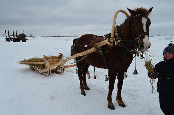 Сбруя для лошадей, виды, из чего состоит и функция конской упряжи