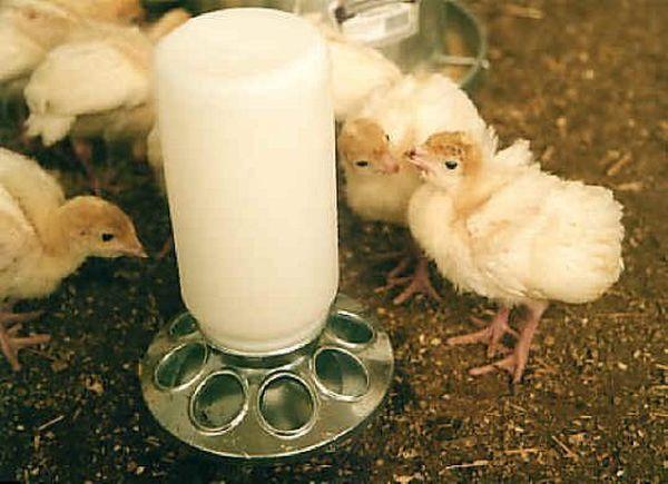 Нифулин форте инструкция по применению для птиц: кур, бройлеров, гусей, индюшат и голубей