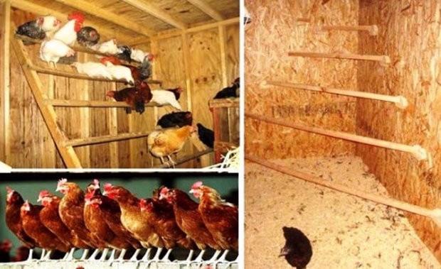 Насест для кур: как правильно сделать насест или гнездо для несушек в курятнике своими руками, его размеры и оригинальные идеи для этого