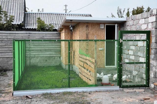 Разведение гусей в домашних условиях для начинающих, особенности зимнего и летнего ухода