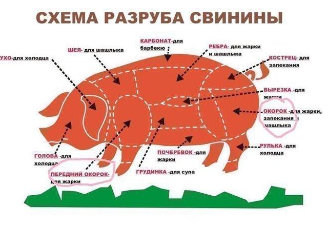 Разделка свиной туши: схема и описание, карбонат свиной это какая часть тела