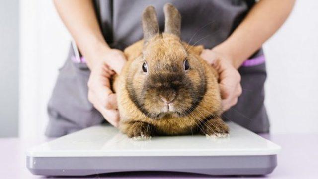 Понос у кроликов и крольчат: причины, что делать, как лечить в домашних условиях