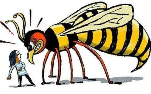 Укус пчелы или осы: опухоль и покраснение, что делать в домашних условиях