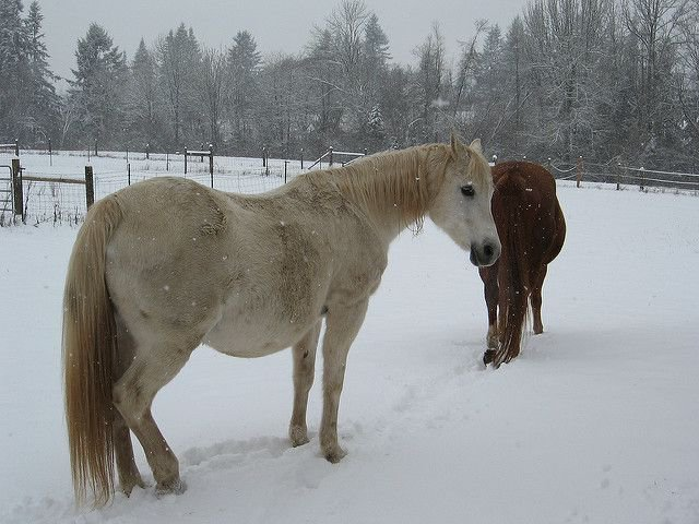 Сколько длится беременность у лошадей, как проходит и сколько жеребят рождается за раз