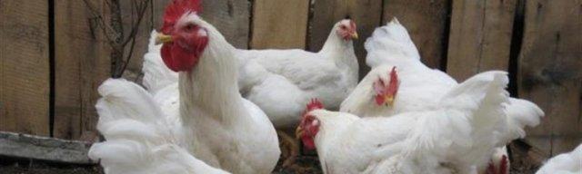 Витамины для кур несушек для яйценоскости, дозировка витаминов для бройлеров