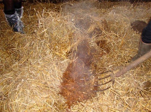Подстилка для курятника с бактериями: био, ферментационная, глубокая, отзывы, фото