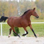 Масти лошадей: характерные отличия, описание, цвета, окраса, оттенка, особенности поведения