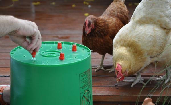 Как сделать поилку для цыплят своими руками из пластиковой бутылки и других подручных материалов