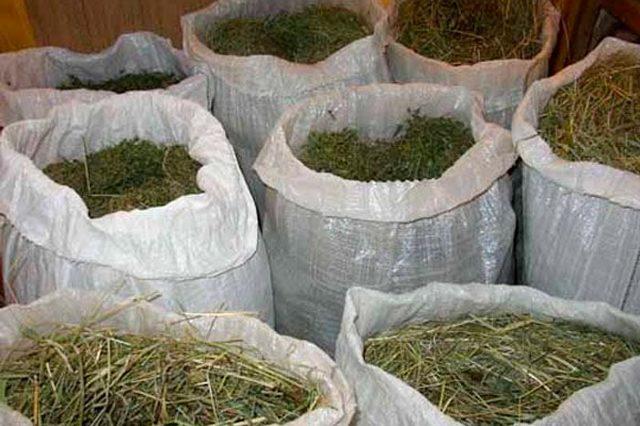 Какую траву можно, нельзя давать кроликам, сколько сена нужно в день и на зиму на одного кролика