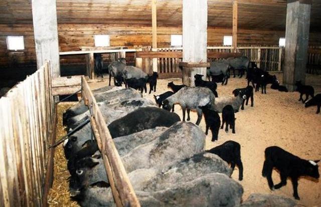 Загон для овец своими руками: выбор места, этапы строительства, обустройство овчарни