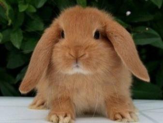 Можно ли купать кролика декоративного и как мыть правильно в домашних условиях