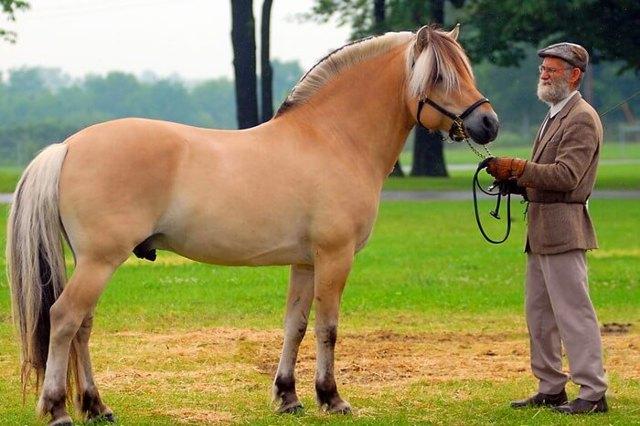 Самые красивые лошади в мире, редкие и необычные масти