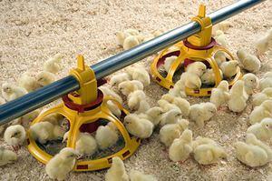 Эриприм бт инструкция по применению для птиц и других животных