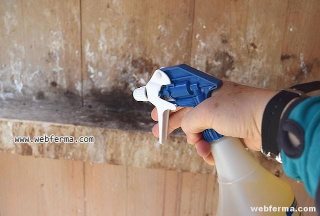 Куриные блохи: чем обработать курятник, супер средства от паразитов