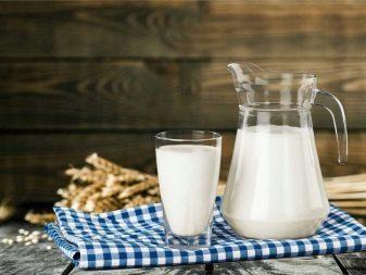 Полная характеристика джерсейской породы коров: плюсы и минусы, цена и отзывы