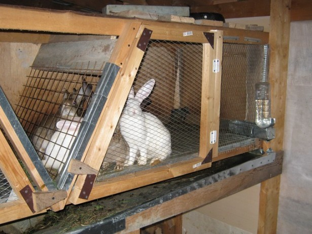 Клетки для кроликов производственные