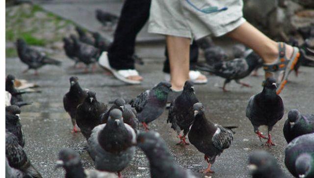 Как поймать птицу на улице руками, ловушки для голубей, способы ловли