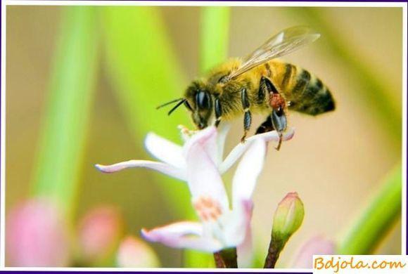 Объединение пчелиных семей осенью: как и когда происходит соединение