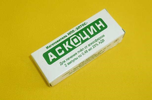 Аскосфероз: лечение и профилактика, особенности и признаки болезни