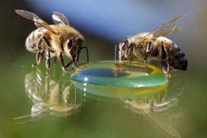 Подкормка пчел в зиму сахарным сиропом: что едят, как кормить, когда начинать