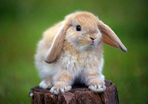 Чем кормить декоративного кролика в домашних условиях, что едят, чем питаются, что можно давать