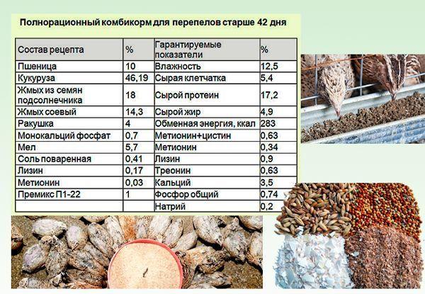Чем кормить перепелов: что выбрать, состав корма, что едят перепелки-несушки