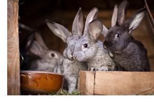 Чем кормить кроликов в домашних условиях для начинающих