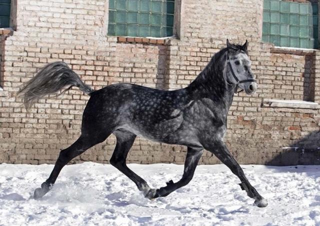 Максимальная скорость лошади в км/ч: показатели разных видов, рекордсмены